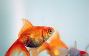 at-home-stress-relievers-fish-tank